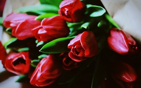 Обои цветы, лепестки, тюльпаны, красные
