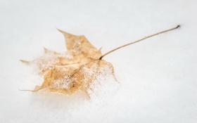 Картинка осень, макро, снег, лист