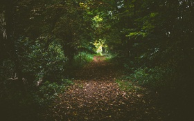 Обои дорога, зелень, лес, тропинка