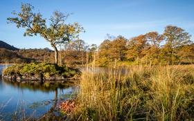 Обои осень, небо, трава, деревья, озеро, остров