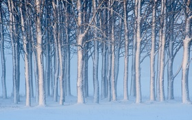 Обои лес, снег, деревья