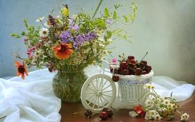 Обои лето, вишня, ягоды, ромашки, букет, натюрморт, композиция