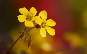 Картинка природа, растение, лепестки, стебель