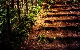 Обои песок, трава, ограда, лестница, старая, заросшая