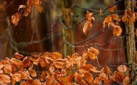 Картинка осень, листья, забор
