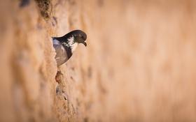 Обои птица, фон, природа