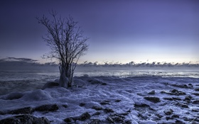 Обои лёд, дерево, берег, море
