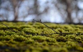 Картинка мох, ветка, боке