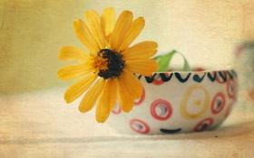 Обои фон, чашка, цветок