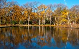 Обои осень, деревья, озеро, пруд, парк, отражение