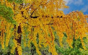 Картинка осень, небо, листья, дерево, краски