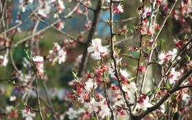 Картинка цветы, розовый, весна