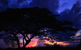 Обои облака, пейзаж, ночь, дерево, силуэт, зарево