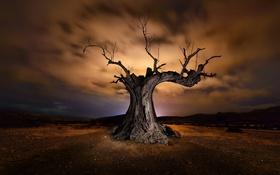 Картинка небо, ночь, дерево