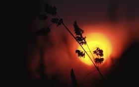 Картинка трава, закат, растение, силуэт, зарево