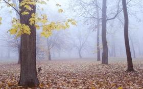 Обои осень, лес, листья, деревья, туман, крест, кладбище