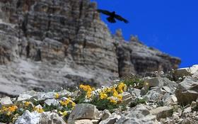 Обои цветы, горы, камни, скалы, птица, нибо