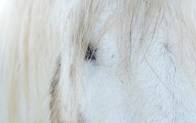Обои морда, макро, конь