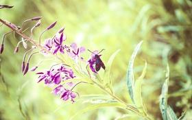 Картинка листья, цветы, ветки, стебли, крылья, жук, точки