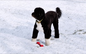 Обои dog, winter, Washington, player)