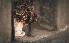 Обои горшок, фон, цветы