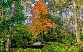 Обои фото, Природа, Деревья, Парк, США, Atlanta