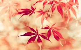 Картинка природа, фон, осень, листья