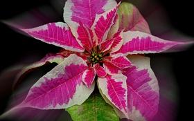 Обои листья, природа, растение, цвет