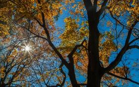 Обои дерево, лучи, листья, небо, осень