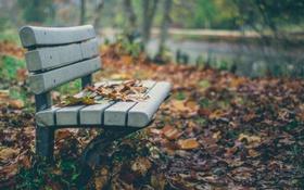 Картинка парк, природа, осень