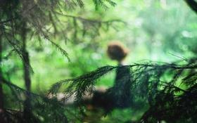 Обои зелень, лес, девушка, ветви, фигура, ёлки