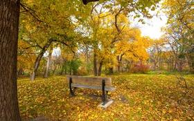 Обои грусть, осень, трава, листья, парк, дерево, настроение