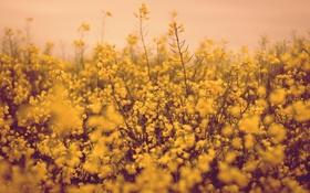Картинка цветы, стебли, поле цветов