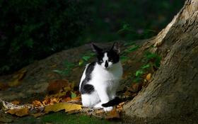 Обои котэ, котяра, кошак, дерево