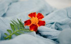 Обои одеяло, цветок, лист