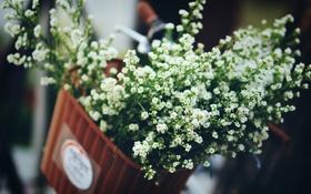 Обои белые, корзина, лепестки, цветы