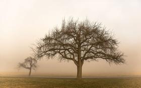 Обои дерево, поле, туман