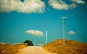 Обои дерево, сельская местность, линии электропередачи, дорога, небо, солнечный, облака