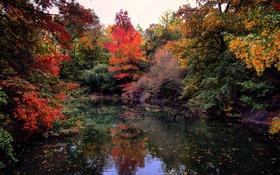 Обои листья, облака, осень, деревья, отражение, зеркало, озеро
