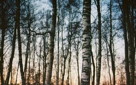 Картинка лес, деревья, ветки, сумерки