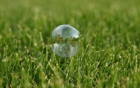 Обои Grass, Green, Bubble