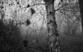 Обои природа, осень, берёза