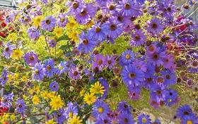 Обои природа, лепестки, сад, луг, клумба