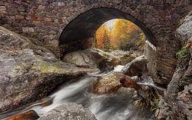 Обои природа, лес, река, мост, осень