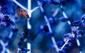 Обои цветы, пчела, растение, стебель, насекомое
