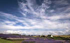 Обои поле, небо, облака, природа, дома, лаванда