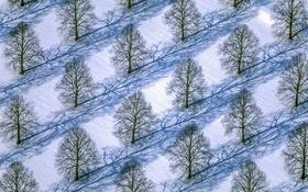 Обои зима, снег, деревья