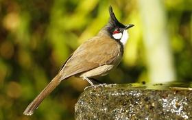 Обои птица, камень, перья, хвост