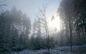 Обои зима, лес, утро