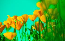 Обои небо, листья, растение, лепестки